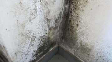 Humidité Maison ile de france